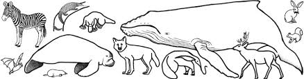 Mammal Coloring Pages