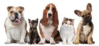 Homeward Bound Pet Memorial Care