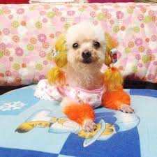 No Shedding Dog Breed by The 25 Best Non Shedding Dog Breeds Ideas On Pinterest Non