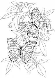 Hard Butterflies Coloring Pages For Adults