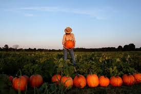 Pumpkin Patch Collins Ms by The Evolutionary Event That Gave You Pumpkins And Squash The New