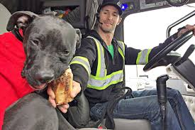 100 Stevens Truck Driving School Driver Volunteers To Take Dog Lost In BC Back Home To