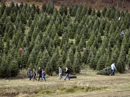 Cartner Christmas Tree Farm by Awesome Picture Of Christmas Tree Business Fabulous Homes