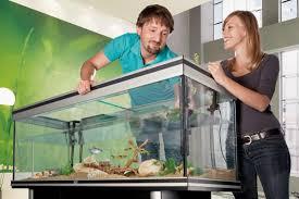 geballtes wissen rund ums aquarium hornbach