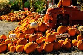 Halloween Express Milwaukee Pumpkin by Visiting Pumpkin Patches In Kansas City