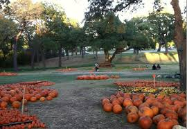 Grapevine Texas Pumpkin Patch by 2014 Mansfield Area Pumpkin Patch Guide Presented By First Choice
