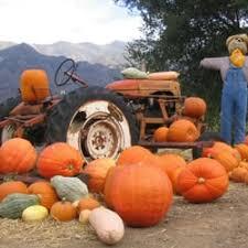 Old Auburn Pumpkin Patch by Rickey Ranch Pumpkin Patch 16 Photos U0026 12 Reviews Pumpkin