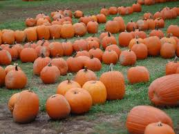 Pumpkin Picking Farms In Maryland by 24 Pumpkin Patches Near Washington D C Mapped