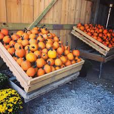 Underwood Farms Pumpkin Patch Hours by Cedar Hill Farm Home Facebook