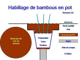 culture bambou en pot culture de bambou en pot pivoine etc