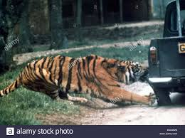 Tiger Ripping A Truck Tyre Off At Longleat Safari Park Wiltshire ... Volusia Races Screw Consistency My Badass Husband Youtube Mytruckparkingcom Let Me Just Park My Full Size Truck In A Compact Spot So That The Hey Dude Blocking Driveway Is It Really Hard To Be 1995 Ford Explorer Xlt Truck And Ranger Food Association Says Proposed Regulations Prime Inc Tanker I Wanna Go Home Please Do Not Park Too Closeaccess Wheelchair Disabled Window Oh Dont Mind Ill Under Your Fiseven As Moving Right Front Of Traffic Light Info Carlosauto111 Twitter Euro Parking Android Apps On Google Play