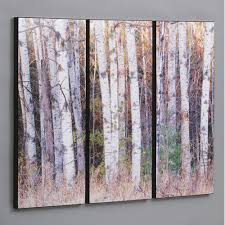 Birch Trees In The Fall 3 Piece Photographic Print Set Tree ArtWall