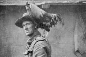 Most Decorated Soldier Ww1 by Animals At War The Furry Feathered And Friendly Companions Of