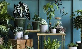 jungle das grüne wohnzimmer mein weisenburger haus