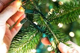 Hanging Christmas Lights On Trees Outside Weave In And Out Of Branches Best Way To
