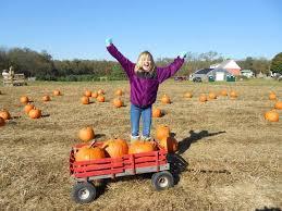 Pumpkin Patches In Shepherdstown Wv by Ridgefield Farm Harpers Ferry Wv
