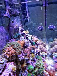 Can I Aquascape A 55 Gallon Tank For Corals If It Is Only 13