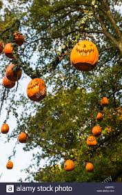 Halloween Busch Gardens by Multiple Smiling Pumpkin Jack O U0027lantern Decorations Hang High From