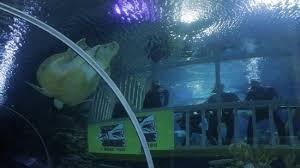 aquarium geant a visiter belgique aquaria klcc kuala lumpur 2018 ce qu il faut savoir pour