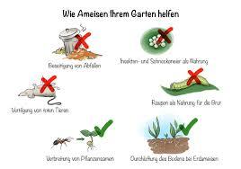 ameisen im garten arten bekämpfung nutzen und mehr