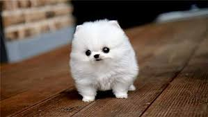 Top 10 Dogs That Dont Shed by Small Dogs That Stay Forever Best Dog 2017