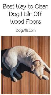 Dog Urine Wood Floors Vinegar by Best Way To Get Dog Hair Off Hardwood Floors Titandish Decoration