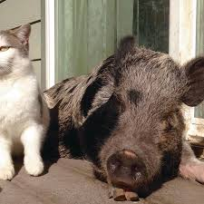Heartbreaking Uplifting After Teens Death The Pigs He