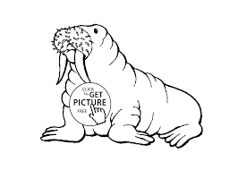 Walrus boy animals coloring pages for kids printable free