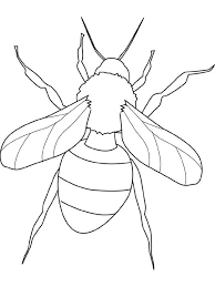 Insect Coloring Pages 10