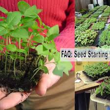 FAQ: Seed Starting With Soil Blocking - The Gardener's Workshop Primordial Solutions Home Facebook If You Ever Buy Plants Youll Love This Trick Wikibuy 30 Off Hudson Valley Seed Library Promo Codes Top 2019 View Digital Catalog Leonisa Discount Code Gardeners Supply Company Coupon Groupon 50 Promotion October Online Coupons Thousands Of Printable Midwest Arborist Supplies Penguin Stickers Chores Household Tasks Laundry Fitness Cleaning Gardening Planner Voucher Codes Food Save More With Overstock Overstockcom Tips Mygiftcardcom