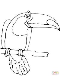 Roi Des Adultes De Coloriage Toucan Image Vectorielle Kchungtw