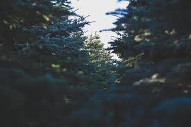 Seattle Christmas Tree Disposal 2015 by Boss Magazine 6 Tips To Reduce Your Holidays U0027 Carbon Footprint