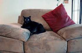 Microfiber Sofas And Cats by Cleaning Stains On Microsuede Furniture Thriftyfun