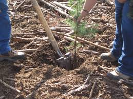 Christmas Tree Seedlings by 5 Ways To Abuse Your Tree Seedlings And How To Avoid Them