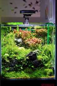 1291 Best That Scape Images On Pinterest | Aquascaping, Planted ... 329 Best Aquascape Images On Pinterest Aquarium Ideas Floratic Visiting Paradise At Shah Alam Planted Aquarium Aquascape Things Aquariums Aquascaping Malaysia Diy Pertama Kali Aquascaping October 2010 Of The Month Ikebana Aquascaping World Sumida Aquarium Reloaded Fish Tanks And Designs Awesome A Moss Experiment Its All About Current Low Tech Tank Cuisine Wonderful Small Cubical Styles Planted The Surreal Submarine Amuse