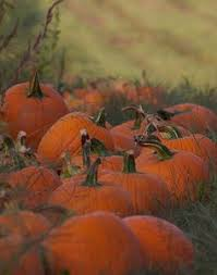 Pumpkin Patch Collins Ms by October