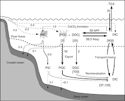 Define Carbon Sink Geography by Sabine And Feely The Oceanic Sink For Carbon Dioxide