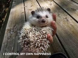 Porcupine Eats Pumpkin by Spooky Hedgehog Hedgehoglyrics Twitter