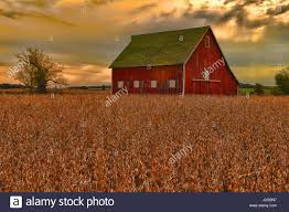 USA, Indiana, Soybean Field With Red Barn Stock Photo, Royalty ... Farm House 320 Acres Big Red Barn For Sale Fairfield The At Devas Haute Blue Grass Vrbo Fair 60 Decorating Design Of Best 25 Barns Ideas On Pinterest Barns Country And Indiana Bnsfarms Etc A In Water Color Places To Visit Nba Partners With Foundation For 2015 Conference I Lived A Dairy Farm When Was Girl Raised Calves 10 Michigan Wedding You Have See Weddingday Magazine