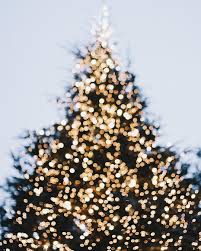 Christmas Tree Cutting Permits Colorado Springs by 17 Best Images About Deck The Halls On Pinterest Christmas Trees