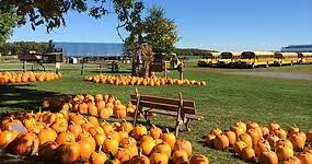 Rileys Pumpkin Patch Pittsburgh by Coolspring Corn Maze Pumpkin Patch And Hay Rides