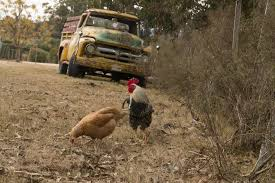 Chicken Tax Makes Trucks Expensive And Unavailable - Foundation For ... Tiger Truck Wikipedia Hessert Chevrolet A Pladelphia Dealership Serving Camden Cherry Beck Masten Buick Gmc South Houston Car Dealer Near Me Jordan Sales Used Trucks Inc Ubers Selfdriving Trucks Are Now Delivering Freight In Arizona Mercedesamg G 63 Suv Warrenton Select Diesel Truck Sales Dodge Cummins Ford Volvo