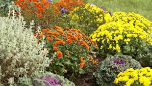 fall blooming annuals and perennials