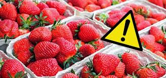öko test gefährliche pestizide in erdbeeren aldi edeka