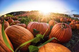 Connecticut Field Pumpkin For Pies by Freshpoint So Is It Really Pumpkin You U0027re Buying In Those Cans