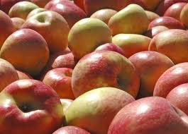 20 things you didn t know about Minnesota s famous Honeycrisp