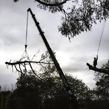 Go Climb A Tree Psychology Today Australia