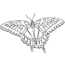 Tiger Swallowtail Butterfly Printable Coloring Page
