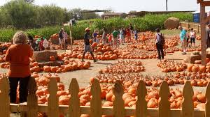 Pumpkin Patch Near Austin Tx by 9 Central Texas Day Trips To Celebrate Fall Austin Amplified