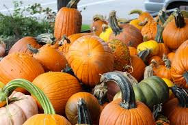 Chatham Kent Pumpkin Patches by 7 Activities To Spice Up Your Fall Break Her Campus
